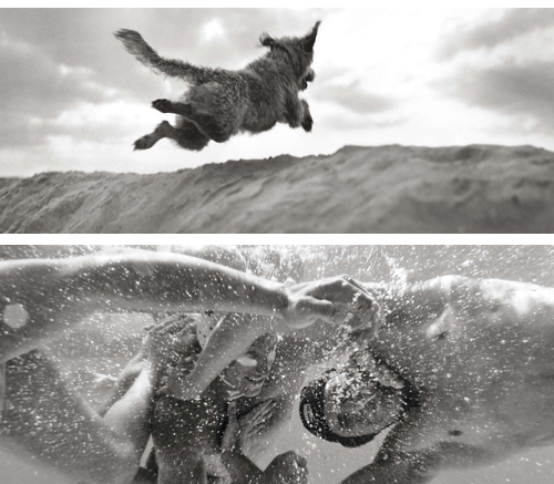 dog_swimmers_small
